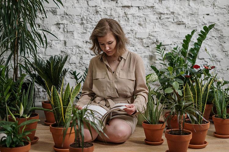 家里放几盆绿植,能除甲醛吗?